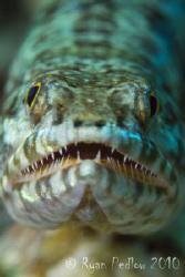 Lizard Fish.  Canon 7D, 100mm macro. by Ryan Pedlow