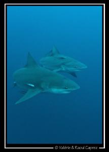 Synchronized swimming ! by Raoul Caprez