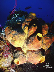 This image shows the many colors found on the reefs off C... by Steven Anderson