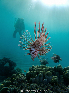 Lionfish with diver , taken with Canon G10 at El Quadim by Beate Seiler