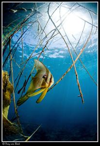 Batfish 1 by Dray Van Beeck