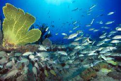 Sugar Wreck School, Bahamas (Nikon F4, 18mm/3.5, Aquatica... by Andrew Dawson