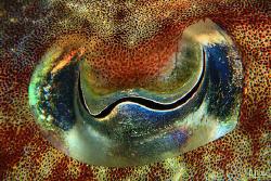 THE EYE. Eye of a cuttle fish. I found this girl putting ... by Arthur Telle Thiemann
