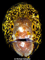 Moray portrait, Milne Bay, PNG by Michael Gallagher