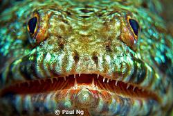 Hi Divers! by Paul Ng