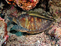 Turtle & company resting on a ledge. by Stuart Ganz