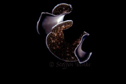 Nightdancer by Steffen Binke