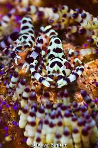 harli shrimp feedin by Dave Baxter