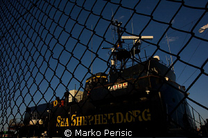 Behind the wire. The Sea Shepherds, Steve Irwin quarantin... by Marko Perisic