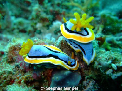 Nudibranch - taken with fuji f31 w/ internal strobe.