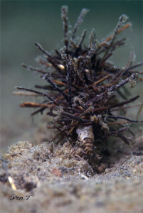 Today's dive with Dani, a caddisfly larva with portable c... by Sven Tramaux
