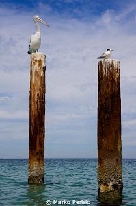 Pylons by Marko Perisic
