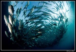 Jackfish on the Liberty. by Dray Van Beeck