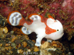 Tiny clown froggie at Basura by Eric Fly