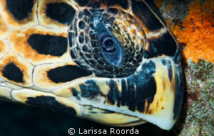 Turtle hiding. by Larissa Roorda
