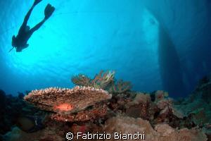 Diving the Ribbon Reefs by Fabrizio Bianchi