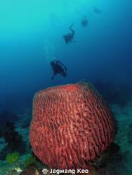 pot coral and divers by Jagwang Koo
