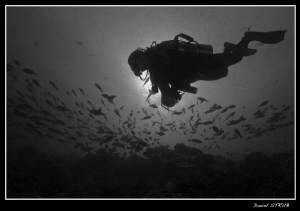 Buddy Ray during our last trip to the Maldives by Daniel Strub