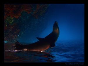 3...2...1...0...Start  Sea Lion, Galapagos Islands Fli... by Aleksandr Marinicev