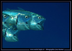 Eating time for these fishes... Que du bonheur... :O)... by Michel Lonfat