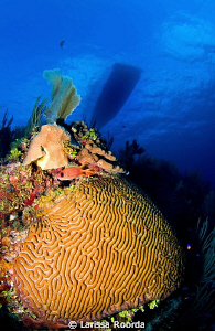 Brain coral and squirrelfish. by Larissa Roorda