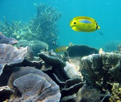 Ningaloo Reef, Western Australia by Penny Murphy