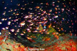 School of Fish by Jagwang Koo