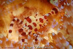 Foto sacada en el estrecho de Lembeh, lugar extraordinari... by Juan Valenciano