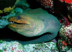 eels incredible and they can get so BIG!!!!!!!! by Michael Odonnell
