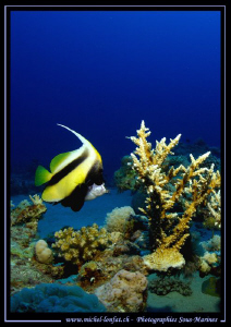 Diving the Red-Sea in Egypt... Que du bonheur... :O)... by Michel Lonfat