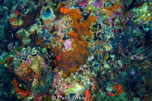 Burst of colors. by Carlo Greco