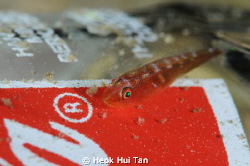 Finally a fish that approves of Coca Cola. photographed ... by Heok Hui Tan