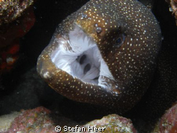 Nice moray is opening its mouth! Was careful with my fing... by Stefan Heer