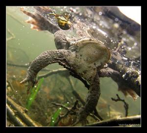 Frog Life by Veronika Matějková