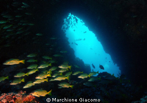 The cave Coco island 2010 Nikon D200, 17-35. twin strobo by Marchione Giacomo