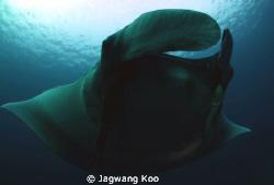 Manta Ray by Jagwang Koo