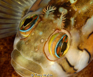 Rainbow eyes by Tony Makin