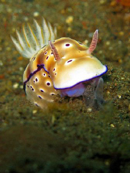 Nudi from Tulamben in Bali by James Dawson