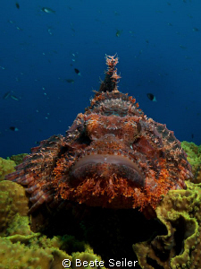 Scorpionfish , taken at El Quadim with Canon G10 by Beate Seiler