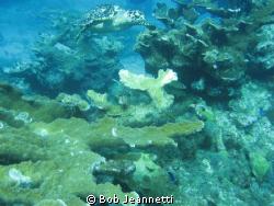 Taken at Chankanab Reef, over 3 feet long by Bob Jeannetti
