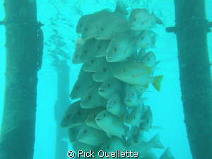Just keep swimming,swimming,swimming. by Rick Ouellette