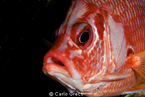 Big eye taken by surprise. by Carlo Greco