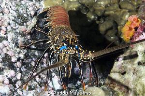 big lobster nikon d2x 17-35mm by Puddu Massimo