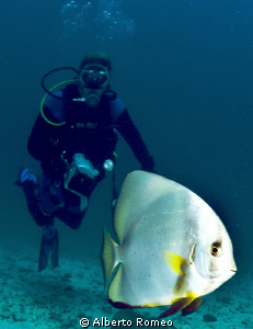 Meeting with the  the batfish. by Alberto Romeo