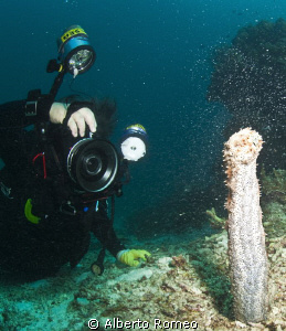 """Sea cocumber """"in erection"""" spowning. This rare occurrenc... by Alberto Romeo"""
