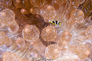 I am so tiny!  