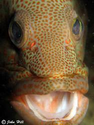 One very obliging Coral Grouper, taken under the SeaVentu... by John Hill