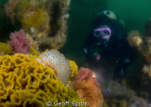 diving on the wreck of the Pietermaritzberg in False Bay ... by Geoff Spiby