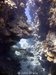Roatan Reef by John Grana