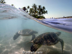"""Surf's up dude"".....""I know"". by Stuart Ganz"